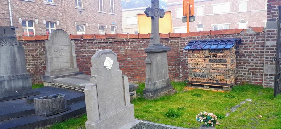 Des insectes dans nos cimetières !